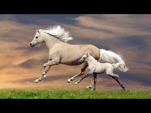Лошадь - уникальное животное (рассказывает биолог Александр Аболиц)