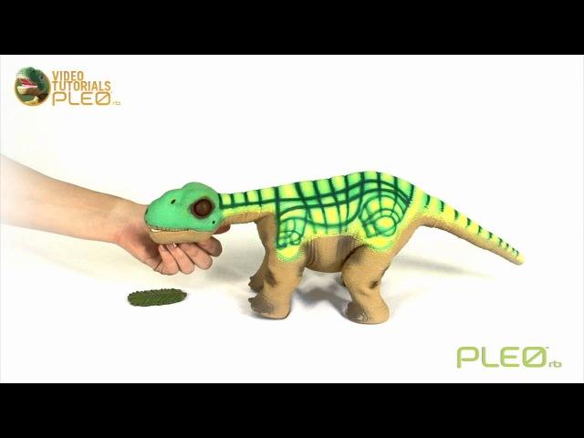 Робот-динозавр Pleo rb - кормление