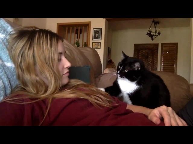Кот просит погладить - Cat politely asking to get petted