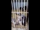 24 02 2018 щенки черная девочка белый паренек