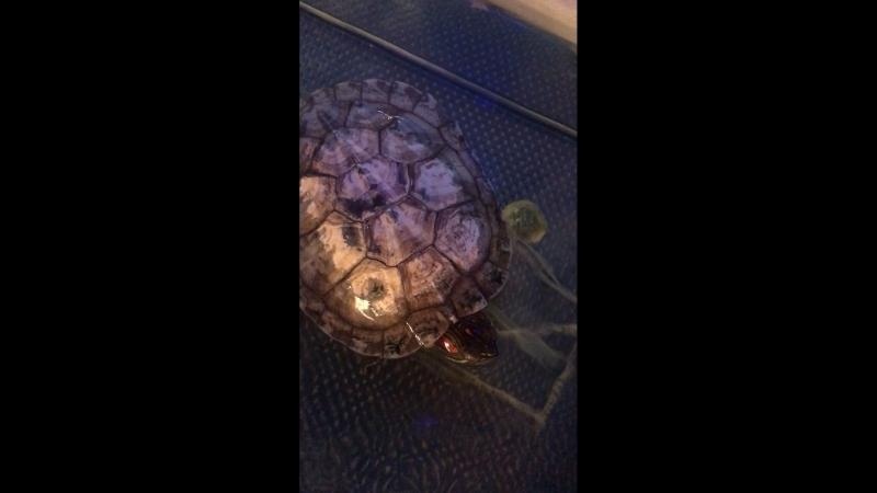 Говорящая черепаха 🐢 😲😅