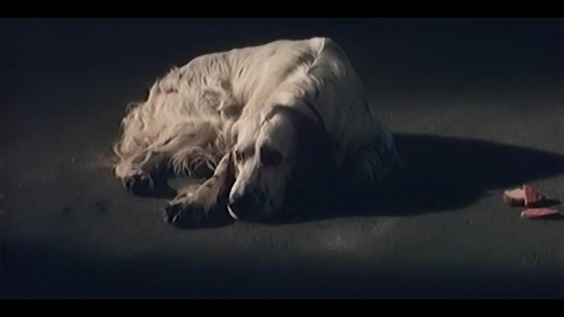 «Белый Бим Чёрное ухо» |1977| Режиссер Станислав Ростоцкий | драма, экранизация