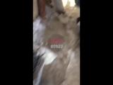 В сети появилось видео с места взрыва в центре Донецка.   Донецкий телеканал «Юнион» опубликовал первое видео в места взрыва в ц