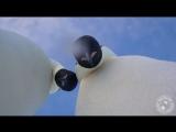 Пингвинье селфи