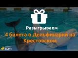 Розыгрыш билетов в Дельфинарий на Крестовском