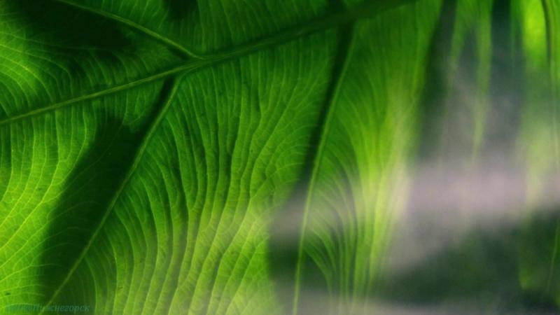 BBC «Сокрытые миры (3). Городские джунгли» (Документальный, природа, животные, 2014)