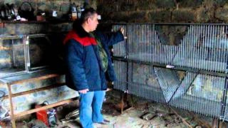 Купить первоклассные клетки для кроликов