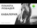 Цикл Планета лошадей   Кавалерия (6 серия)   Канал Живая планета (эфир от 10.03.2018)