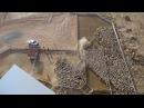 Bucki sheep farm, Henty NSW Australia drone video