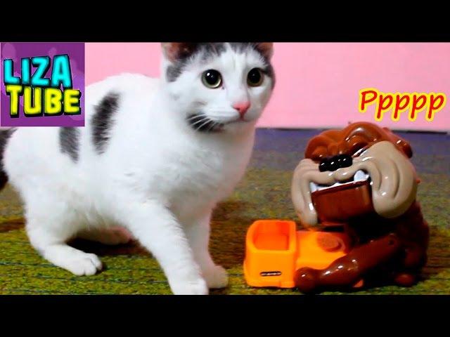 Реакция кота на СОБАКУ КУСАКУ и ПРИВЕТЫ от наших питомцев и канала LizaTube