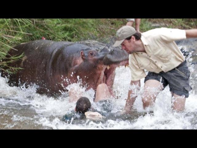 Опасная Африка. Руандa и Бурунди. Бегемоты озера Танганьика