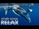 Humpback Whale songs of the ocean deep sleep music relaxation holistic hypno