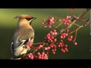 Maria Grinberg - Beethoven - Piano Sonata No 15 in D major, Op 28, Pastoral