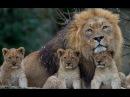 В мире животных Поль Мориа Красивая музыка для души и видео