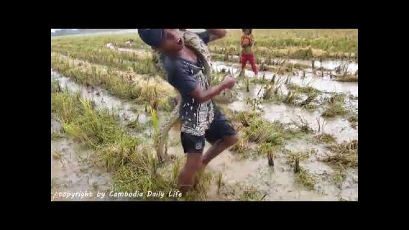 Камбо Блокбастер с рисовых полей 2 -2017
