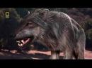 Доисторические хищники Древний Страшный Волк Документальный фильм HD