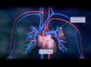 Die Lunge Bayer Science Video Folge 04