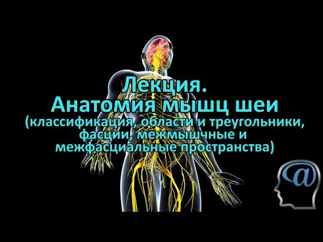 Анатомия мышц шеи. Фасции шеи. Треугольники шеи. Лекция