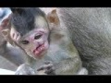 Why Why This world unfair for poor this baby monkey, I cry cry cry too much cos pity little monkey