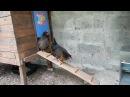 Poulailler fait maison et astuces de construction