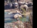 Слонёнок и гусь, конфликт в зоопарке