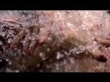 Alex Whiteout - Flame Love (Aleksey Gunichev Piano Version)  ™(Trance  Video) HD