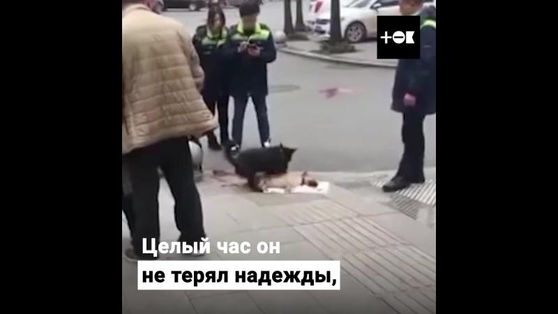 Пёс не теряет надежду оживить погибшего друга, в то время как люди спокойно стоят вокруг