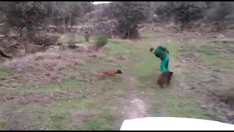 мужик убигает от кабана