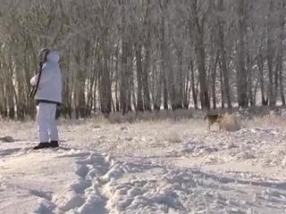 зимняя охота на зайца 23 января