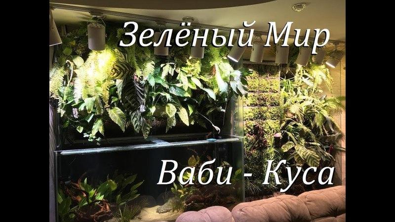 Аквариумпермь рф №4 Зелёный мир Аквариум фитостены Ваби Куса Ваби куса