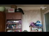 Приколы с Котами - Смешные коты и кошки 2017 _ ПОПРОБУЙ НЕ ЗАСМЕЯТЬСЯ - смешное