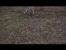 Город-яд 2_ Засекреченная экологическая катастрофа _ Дзержинск _ Забытая территория Оргстекло