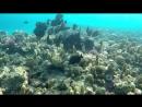 Подводный мир Макади_ Красное море_ Египет. Underwater World of Makadi_ Egipt 20_HD_60fps_00_9178.mp4