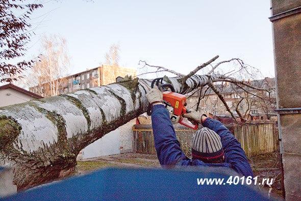 Штормовой ветер повалил в Калининграде и области 40 деревьев и обесточил свыше 100 подстанций