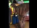 Роботизированный динозавр в ТРК Глобал Сити