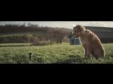 Очень трогательная социальная реклама Dogs Trust That Special Someone