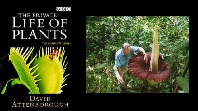 BBC Невидимая жизнь растений 1995 Фильм Дэвида Аттенборо Серии 1 2 3