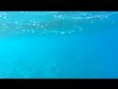 Подводный мир Красного моря.