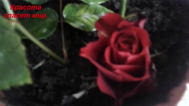 Цветок - воскресный.21.02.2018г