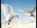 К.Никольский- Птицы белые мои