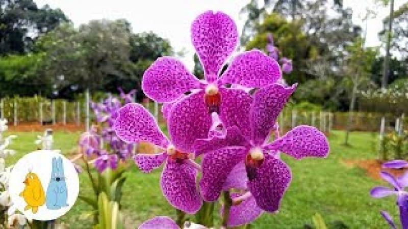 Парк орхидей Куала Лумпур | Orchid Garden Kuala Lumpur
