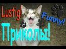 Смешные кошки Funny Cat Lustige Katze