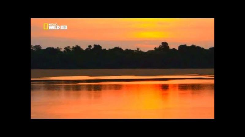 Амазонка. Амазония - реки солнца. Документальный фильм. HD качество