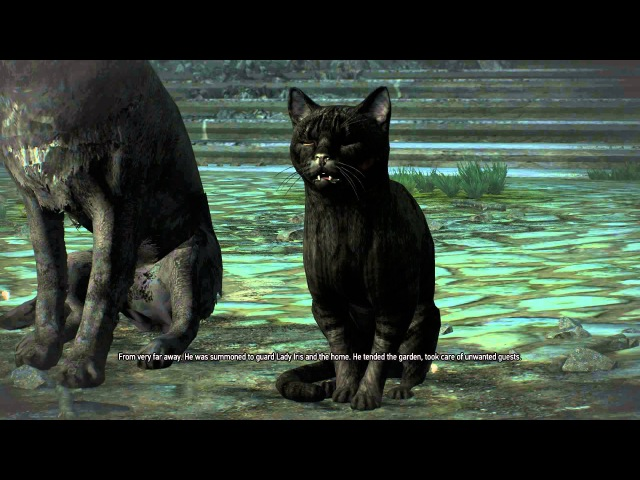 The Witcher 3: Hearts of Stone - Scenes From A Marriage: Black Cat Dog Violet Rose Caretaker Chat