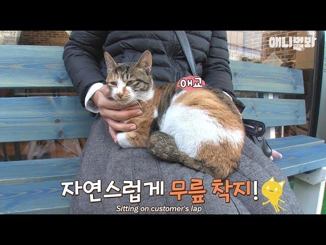 피자집 의자에 앉기만 하면~ 고양이가 무릎위로 온다 고양이를 부르는 요술 5
