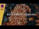 Tutorial COLOR GRADING membuat background video menjadi hitam putih di premiere pro