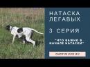 Натаска легавой - 3 серия