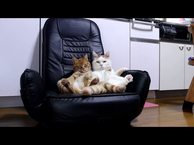黒い座椅子と猫 Cat sitting in a chair 2018 1