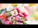 Video Background HD 1080. Футаж Тюльпаны