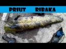 Такого монстра я не ожидал увидеть в этой речке Сплав по Северскому Донцу и сом...